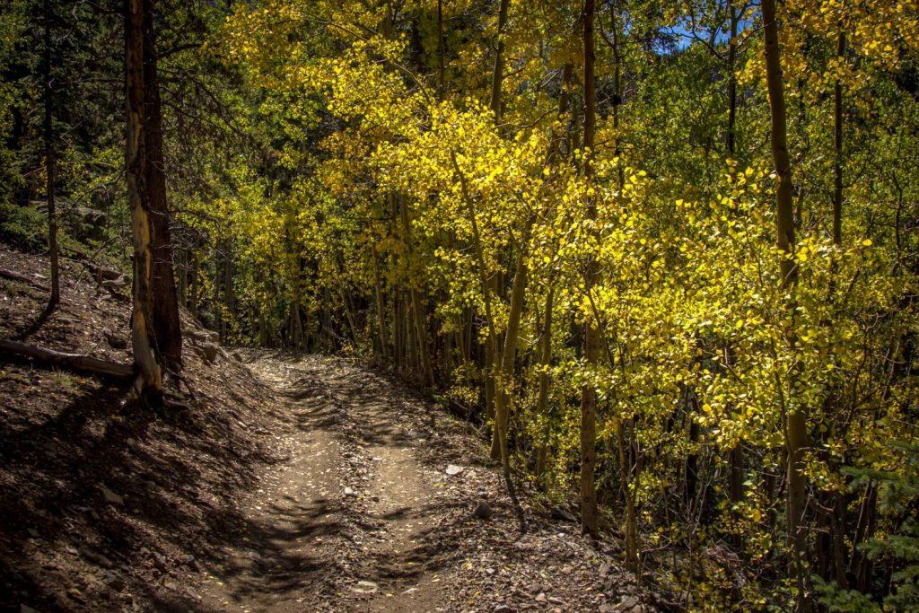 Colorado Autumn Fall Aspens