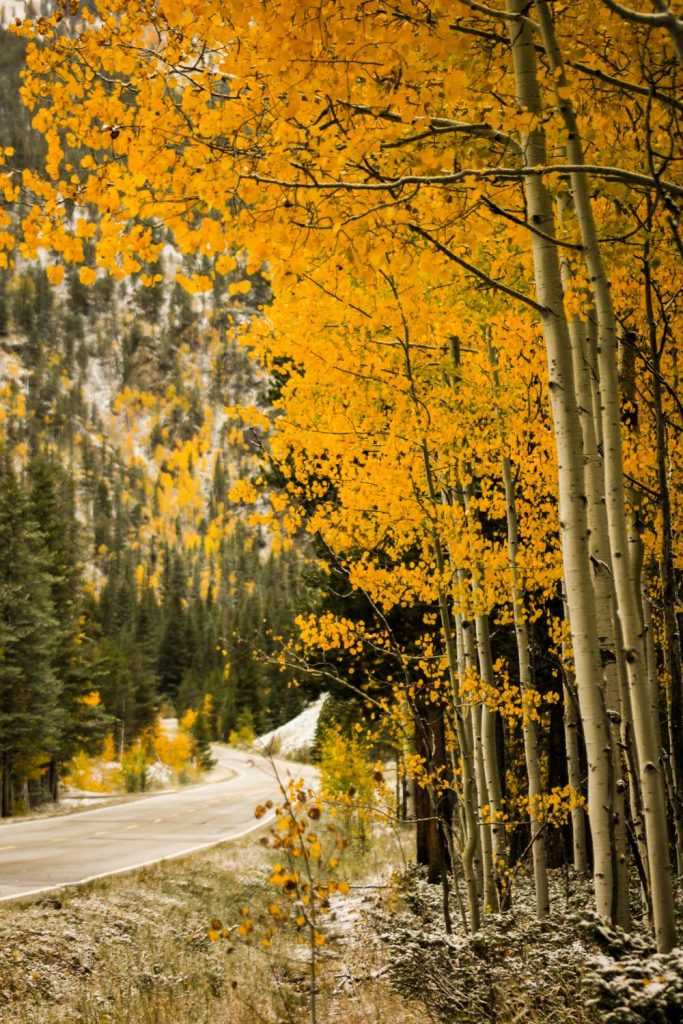 Aspens Colorado Fall Autumn